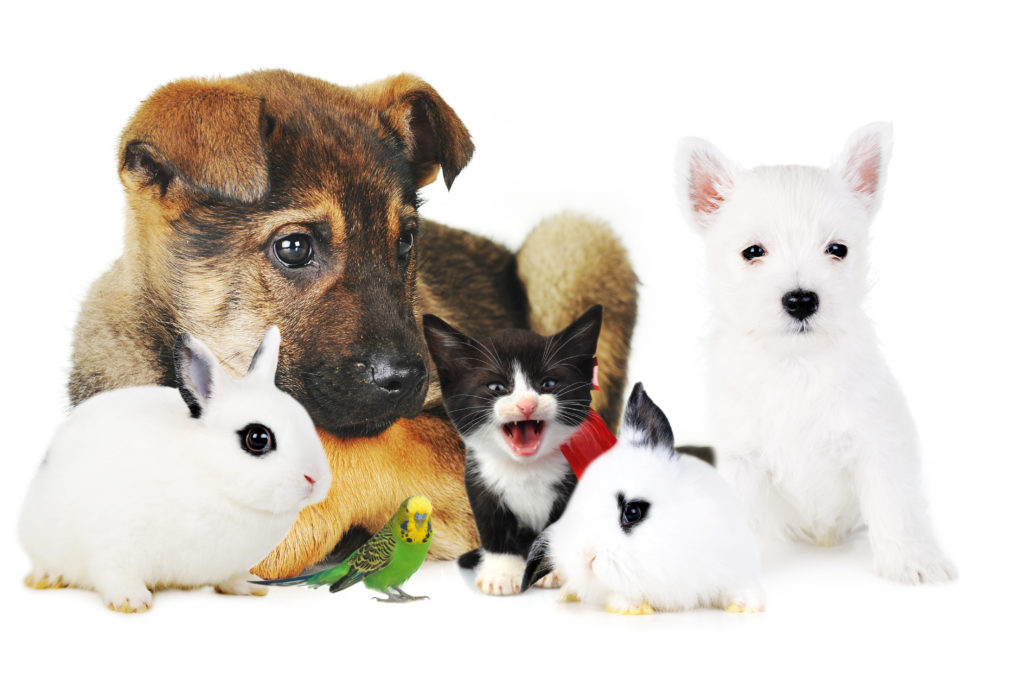 animaux; chien; chat; lapin; oiseau